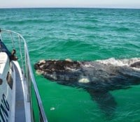 South Africa whale watching