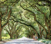 The Avenue of Oaks Aiken