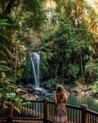 Curtis Falls - Mount Tamborine
